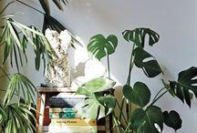 living, breathing plants