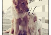 Dogs / Dog Pictures, Dog Wallpapers, Puppy Pictures, Puppy Wallpapers, Dog Pics, Puppy Pics, Dog Quotes, Dog Jokes