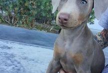 pure love / cats ~ dogs ~ baby animals ~ wildlife ~ cuteness overload