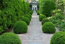 Gardens / by Jenny Rose-Innes