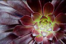 How Succulent / by Natalie Trevino-Hettena