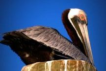 NATURE SHOTS / Flora, Fauna and Fins-there is so much beauty on Hilton Head-show us what you find!