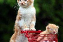 Süße Katzen und Kätzchen mit komischen Ideen