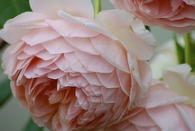 Flora / by Kim O