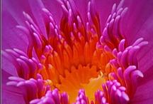 Inspiration: Colour-NatureMade  / by Kim O