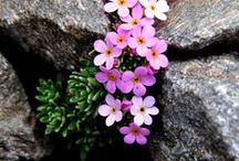 Alpine Landscapes / Alpine landscapes need to be as rustic and rugged as the environment they exist in. The lowest maintenance gardens use perennials which naturally come up each season in the spring and can be accented with rocks for the ultimate alpine landscape.