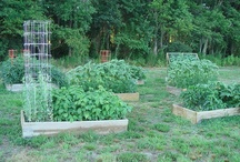 """Gardening / Gardening is """"my"""" time. It relaxes me, helps clear my head, gives me exercise, makes me sweat (detox), and thrills me when I see what becomes of the tiny seeds I planted. / by Tanya"""