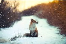 WILDLIFE / by Camille
