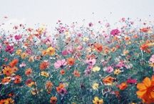 Coming out in bloom / by Jenna Bainbridge