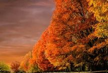beauty of autumn / favorite time of year / by Barbara Courtney