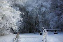 beautiful snow / by Barbara Courtney