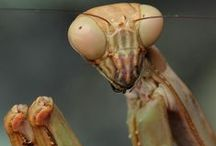 Images of Insects / by Leslie Greene