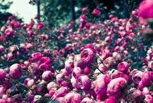 Flower Ruth