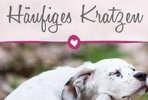 Rund um das Haustier: Katze, Hund & Co. / Tiere sind unser Ein und Alles. Tipps und Inspirationen rund um deinen Liebling findest du hier.