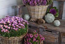 Květiny - dekorace