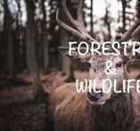 FORESTRY & WILDLIFE