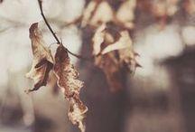 Autumn ★... / BLOG: www.karinecandicekong.com IG: http://instagram.com/bodieandfou FB: http://www.facebook.com/BODIEandFOU CONCEPT STORE: http://www.bodieandfou.com/