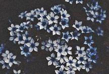 melancholy -- mood board / blue, dark colors, flowers, calm, etc.