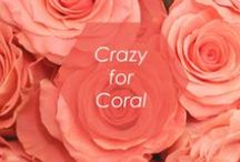 // CRAZY FOR CORAL // / Coral is popping up everywhere lately, and we're absolutely in love! What is your favorite way to wear coral?  / by Foxy Originals