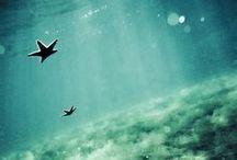 undersea  ❤