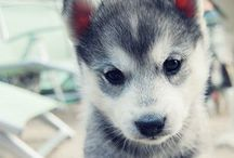 Future Puppy / For WAY in the future, but who doesn't love a cute puppy?