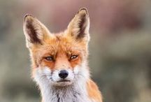 Foxy / by James De Angelis