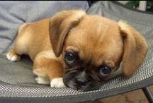 So darn cute! / by Jen Rice