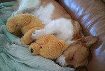 Puppy Love / by Nichole Rhodes