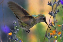 Hummingbirds / by Kim Gaenslen