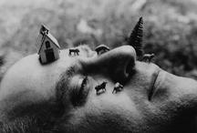 animalia / by Judith Jurica
