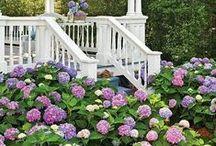 Garden Gardening / by Tamera Dutton