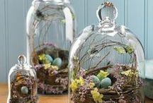 Spring Decor / by Tamera Dutton