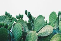 Plants/Greenery