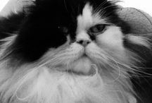 Mon chat heolyne