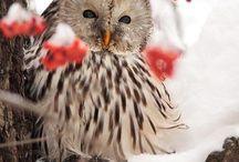 Совы, птицы / Сохранённые - фото, рисунки