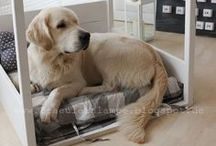 Useful tips and things for a life with a dog / Some tips and things for when you are getting a new puppy.