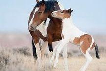 Horses / Horses, horses, horses !