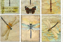 Dragonfly / by Lunar Amulet Co.
