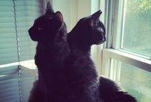Black cats / by Lunar Amulet Co.