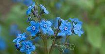 Flowers We Grow / #farmerflorist
