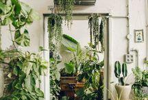 Plants / Jungle beast