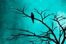 Turquoise / DA OC: Daniel Trevelyan