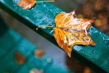 FALL LOVE / FaLl pRoJeCtS; ThAnKsGiViNg PrOjEcTs; AuTuMn sTuFf / by Vicki @More Powerful Beyond Measure