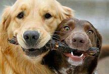 Puppy Love / Freakin love dogs.