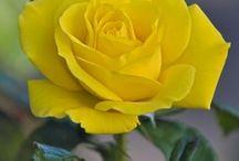 Sunny Day! / Yellow / by Irene Karanja