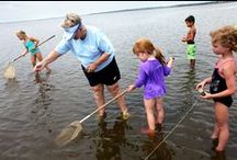 More to Explore / From salt marsh crabbing to the 5k Race for the Planet, there is always more to explore at the Aquarium. / by NC Aquarium at Fort Fisher