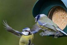 Vogelvoedersystemen