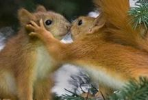 Nuts for Squirrels / by Diane DeTore