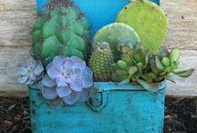 SuCcuLaNts & SeDuMs / Succulents, sedums, growing and decorating  / by Vicki @More Powerful Beyond Measure
