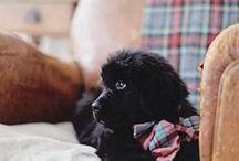 Dogs / Fluffy // Friendly // Doggos